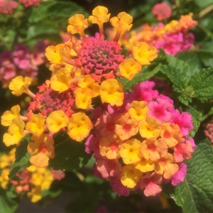 Five Easy Summer Flowers That Can Take The Heat Fruit